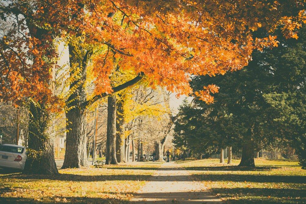 Trees down the street.jpeg